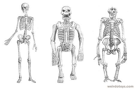 Skeleton lineup